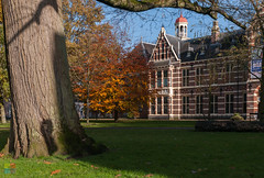 acte de présence (v a n d e r l a a n . fotografeert) Tags: 201711171215 assen brink drenthe drentsmuseum autumn beuk bomen capitolcity grasveld herfst lawn museum trees provinciedrenthe nl
