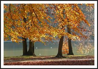 Parure d'automne -  Fall adornment
