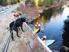 46/52/17 Inspecting the bridge inspectors (Hodgey) Tags: dogs josh lab ralph boxerx bridge kayaks inspectors maine 23degrees water river 52weeksfordogs