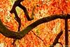 Barbieux ( Nord France ) (Méziane R. Photography) Tags: soleil feuilles couleurs automne autum nikon d750 parc j jardin mézianrphotography