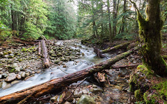 Wisdom Of Your Ways (John Westrock) Tags: nature forest trees river logs alignment washingtonstate pacificnorthwest canoneos5dmarkiii canonef1635mmf4lis