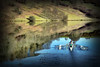 Out of the Blue (Dave Hilditch Photography) Tags: somerset exmoor lake reservoir boat rowing oarsmen reflections ars