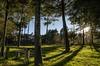 Bosque de cuento (iris.imgo) Tags: paisajes nikond7000 nikon méxico hidalgomexico verde lucesysombras rayosdesol campo landscape paisaje forest bosque arboles arbol