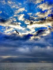 Flying....️ (carlesbaeza) Tags: sea sky mar cielo gaviota gavina seagull storm fly flying volar