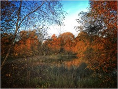 Secluded (andystones64) Tags: silica pond water secluded trees bushes reeds foilage sky cloud nature naturephotography countryside scenic scunthorpe lincolnshire nlincs northlincs autumn autumnal beauty outdoors outside exposure image imageof imagecapture openwater reflection
