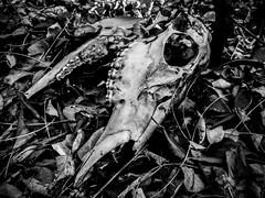 Death (Josh152) Tags: bw blackandwhite skull death phone natrue cemetery s7active