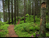 20170805_4 Trail through mossy spruce forest | Bohusleden section 8 - Grandalen to Bottenstugan | Bohuslän, Sweden (ratexla) Tags: ratexlasfameandglory ratexlasbohusledenhike bohusleden bohusledenetapp8 5aug2017 2017 canonpowershotsx50hs bohuslän nature sweden sverige scandinavia scandinavian europe landscape scenery scenic nordiccountries norden skandinavien beautiful earth tellus photophotospicturepicturesimageimagesfotofotonbildbilder hiking hike ontheroad journey vacation holiday semester resaresor sommar europaeuropean summer travel travelling traveling trail path stig forest skog green catchycolorsgreen unlimitedphotos almostanything favorite gsgs