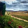Amazing view from Viñas de Garza, Valle de Guadalupe, Mexico (frank.garcia1978) Tags: amazingview winetasting valledeguadalupe mexicanwines vino wine vinosmexicanos rutadelvino bajacalifornia mexico ensenada viñasdegarza