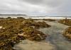 Seaweed at Five Fingers Strand. (moniquevantorenburg) Tags: republicofireland ierland beach strand seaweed zeewier atlanticocean countydonegal atlantischeoceaan peninsulainishowen fivefingersstrand seascape landscape cloudy foggy waves golven mistig wolken olympus124028pro olympusomdem5markii m43 microfourthirds