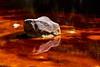 Reflejos en el Tinto (allabar8769) Tags: agua color composición huelva reflejos rocas río ríotinto