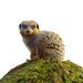 Meerkat+Sentry