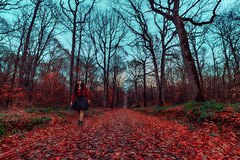 Home before dark (PokemonaDeChroma) Tags: woman walking lookingup foret autoportrait hdr 3exposures tripod trepied automne autumn paris france ciel langit musimgugur hutan pepohonan femme marcher regarde haut wanita perempuan