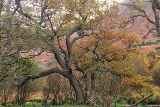 Fantasy Woodland, Aber Falls, Wales