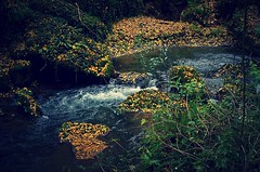 isole e continenti (robra shotography []O]) Tags: brook foliage autumn leaves torrente stream preset processed creek water fallenleaves woods fall forredicorchiano