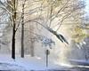 Snow cloud (pedrik) Tags: farmington connecticut usa d7200 gimp snow cloud stop tree trees