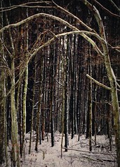 These woods are lovely dark and deep... (blamstur) Tags: woods trees frame snow winter 15challengeswinner