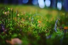 Fairy Tale (Bastian_Schmidt) Tags: nikon macro makro forest wald fairy tale d610 nikkor 50mm 18 green grün mushroom mushrooms pilz pilze colors color colour colours farben