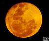04-12-2017_SUPER_MOON_NAMPULA_MOZAMBIQUE (paulomarquesfotografia) Tags: paulo marques sony hx400v moon lua super astro satélite natural night sky noite darckness