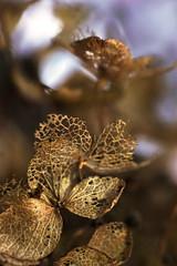 Autumn bokeh (Wim van Bezouw) Tags: forest autumn leaf sony ilce7m2 macro bokeh