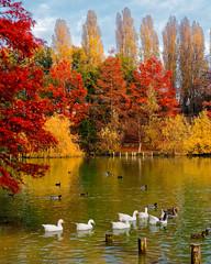 _B230204_DxO (Ryosei Onishi) Tags: rimini pier sunset boat seagulls longiano cesena bicycle rust warm fall autumn colorfull