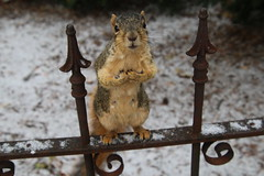 179/365/3466 (December 7, 2017) - Squirrels in Ann Arbor on a Snowy Autumn Day at the University of Michigan (December 7th, 2017)