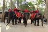 Cambodia (Bogdan J.S.) Tags: azja asia cambodia kambodża słoń elephant zwierzę animal angkorthom ludzie people