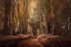 Sinfonía de otoño (nurianl) Tags: acequia otoño valladolid castillayleon paisajes landscape canon6d