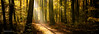 Mystical Forests (MDW Photo Projects) Tags: forests trees autumn landscape lightning natur light naturallight kiel schleswigholstein magiclight mdwphotoprojects martidwinter ways