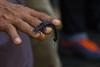 IMG_4596 (stkerd) Tags: 2017 asia borneo malaysia millipede sandakan sepilok sepilokorangutanrehabilitationcentre tractormillipede
