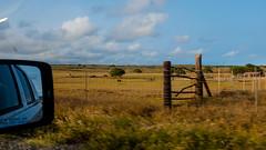 On our way back from the green sand beach (seekjim20) Tags: fujix100s hawaii naalehu unitedstates us