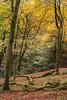 Hayedo de la Biescona (elosoenpersona) Tags: hayedo biescona sierra del sueve asturias forest otoño autumn fall color otoñal colunga haya fagus elosoenpersona