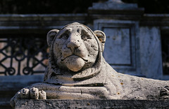 The lion in one of the symbols of Perugia (B℮n) Tags: rocca paolina palazzodellaprefettura perugia italia italy umbria italië gallery gallerie hilltop town baroquefacade roman ruins history wander hiking walking street walk girl woman building cathedrale duomo travel holiday vacation etruscan medieval umbrië monuments walls museum church centre baroque artwork culture steps lion statue vialeindipendenza giardini carducci symbol