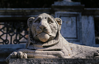 The lion in one of the symbols of Perugia