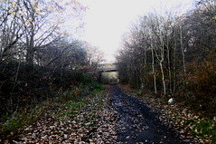 Cutting south of Hound Hill Lane    (Silkstone - Wath old railway)    November 2017 (dave_attrill) Tags: houndhilllane cutting great central railway electrified woodhead sheffield victoria manchester picadilly closed 1970 1955 stocksbridge engine transpennine upper don trail penistone wortley wadsley neepsend dunford thurgoland tunnel oxspring barnsley junction huddersfield allweather cycleway bridleway footpath remains silkstone 2016 1981 dove valley november 2017 dovevalleytrail worsbrough worsbroughbranch