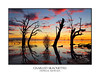 Old gnarly trees on the lake at sunset (sugarbellaleah) Tags: sunset outback australia pretty silhouette water lake gnarly oasis tree bush plant dead contrast vibrant colour outdoors portrait rural countryside place camping travel tourism menindee nsw awesome spectacular clouds weather tranquil serene calm reflections sundown scenery vista old
