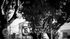 DSC07301 (O KDUKO) Tags: araraquara blackandwhite blackandwhitephotography pictureoftheday blackandwhitephoto photography bnwcaptures monochrome monochromatic instablackandwhite monoart instabw bw bwstylesgf artgallery visualart bwphotooftheday photoshoot bwstyleoftheday aesthetics streetphotography arts