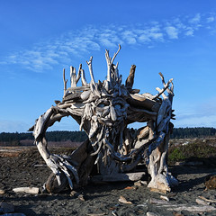 20171210 Esquimalt McGnarley Ent (Robert Harwood) Tags: esquimalt lagoon vancouverisland britishcolumbia victoria canada sculpture driftwood witcombe alex driftedcreations creative ent mcgnarley beach