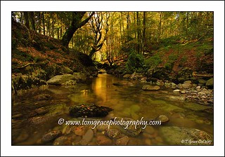 002A3030   River Mahon Crough Woods Co Waterford