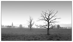 Morning trees near Essey (Wilco1954) Tags: mist trees essey france cotedor burgundy