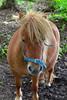 Pony, Ballyronan (nathanlawrence785) Tags: northern ireland uk ulster antrim londonderry tyrone