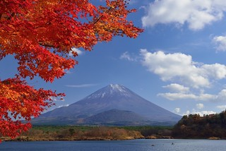 Maples and Mountain Fuji 富士楓紅