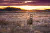 a deer (3dRabbit) Tags: deer animal denver colorado morning december winter light nature outdoor sungjinahn nikon 85mm d810
