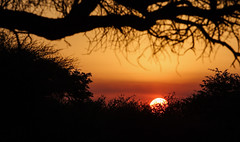 When The Day Ends (AnyMotion) Tags: sunset sonnenuntergang silhouettes silhouetten 2008 dqaeqaregamefarm botswana anymotion africa afrika nature reisen travel landscape landschaft landschaftsaufnahmen ngc npc