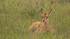 Nairobi-Nationalpark-7230 (ovg2012) Tags: kenia kenya nairobi nairobinationalpark