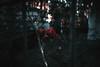 Magic garden (Master Iksi) Tags: rose garden red flowers flower belgrade beograd nikond7100 sigma1750 amazing nature beautiful