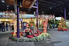 Gardens by the Bay (chooyutshing) Tags: xmastree decorations christmasfestival2017 visitorscentre gardensbythebay baysouth marinabay singapore