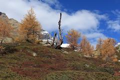 Lötschental (bulbocode909) Tags: valais suisse lötschental montagnes nature automne arbres mélèzes nuages neige paysages vert rouge orange jaune bleu