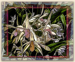 Orchid abstract (boeckli) Tags: orchid orchids orchideen flowers flower fleur flora blume blumen blüten bloom blossom blossoms blooms textures texturen texture textur topaz topazstudio colourful colorful bunt farbig abstract abstrakt photoborder painting painterly awardtree