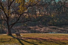 Peaceful (kmac1960) Tags: fall autumncolors shawneemissionpark park bench kellymcgregorphotogrphy tamronlens canon80d kansas