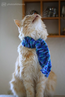 presenting the blue scarf